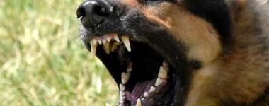 280335-dogs-german-shepherd-2561
