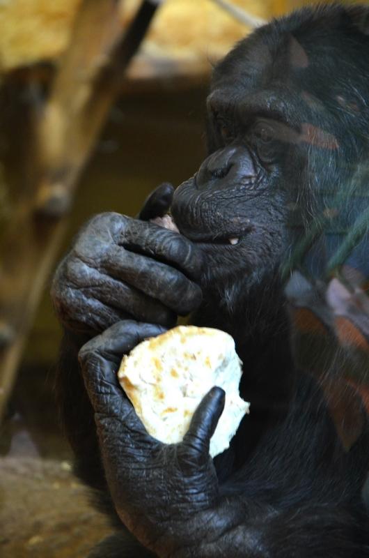 simpanzi7